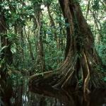 L'Amazonie est la forêt de tous les records.