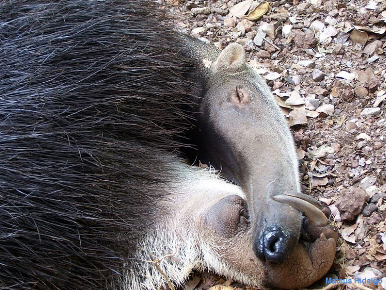 animaux-amazonie10