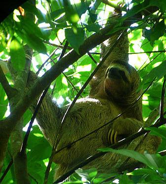 animaux-amazonie28