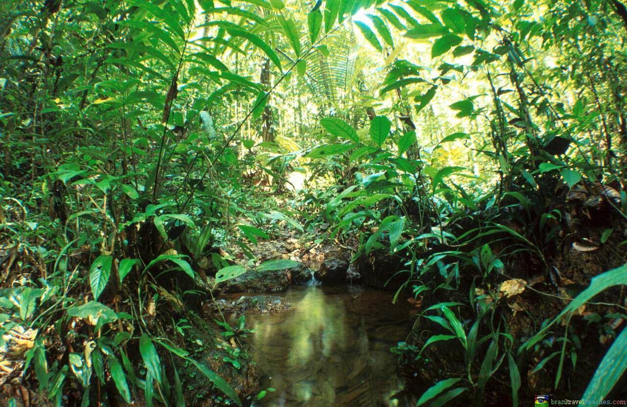 Top L'Amazonie : une forêt équatoriale de tous les records - Brasil  XZ68