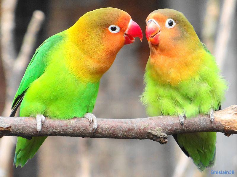 oiseaux-am3