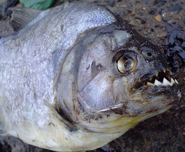 poissons-am5